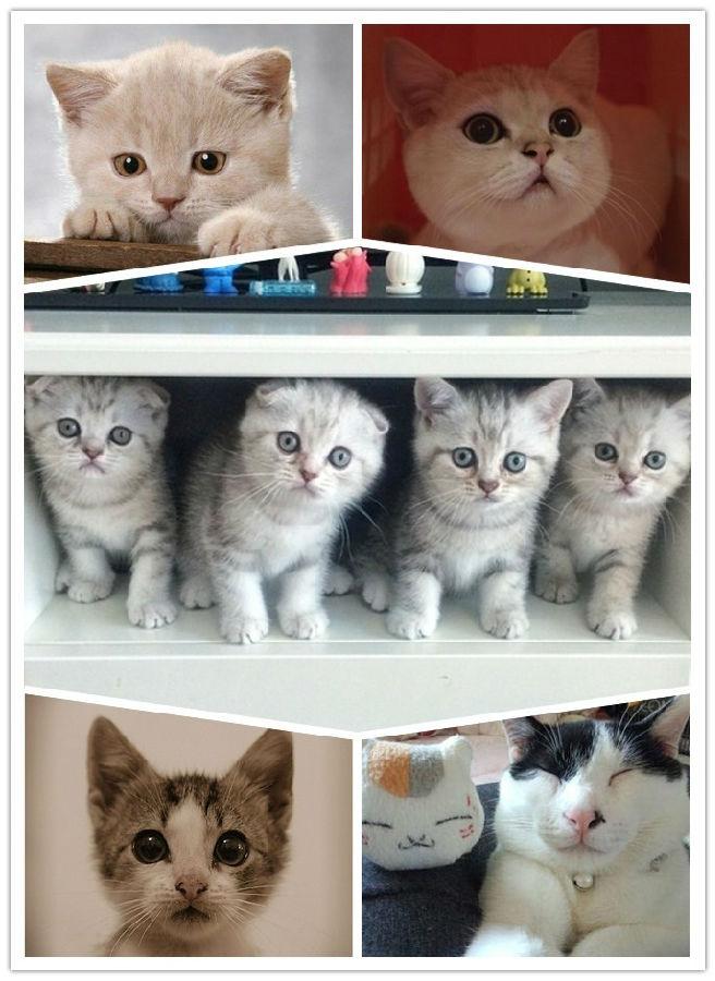 """""""猫咪老师""""图文征集 寻找你身边最萌的猫咪!"""